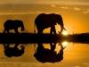 2794_sudafrica_elefantes1